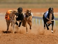 Greyhound Derby, Sports, computer desktop wallpapers, pictures, images