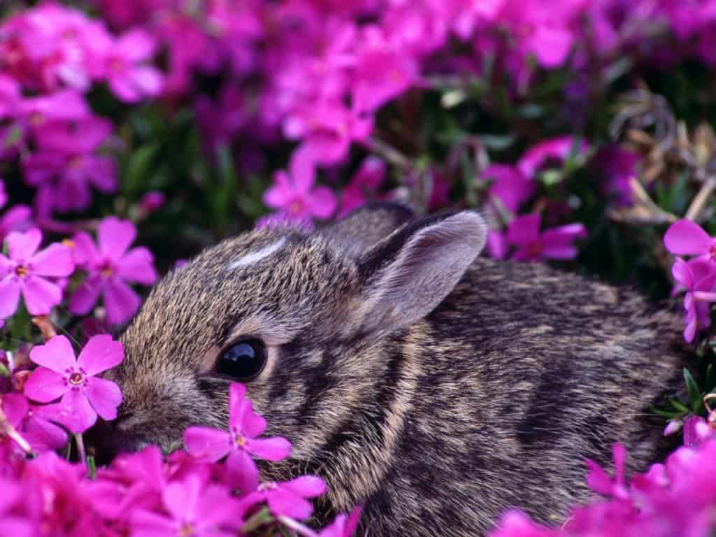 bunny computer wallpapers - photo #39